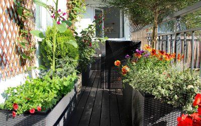 Cómo crear un huerto urbano en el balcón de tu casa