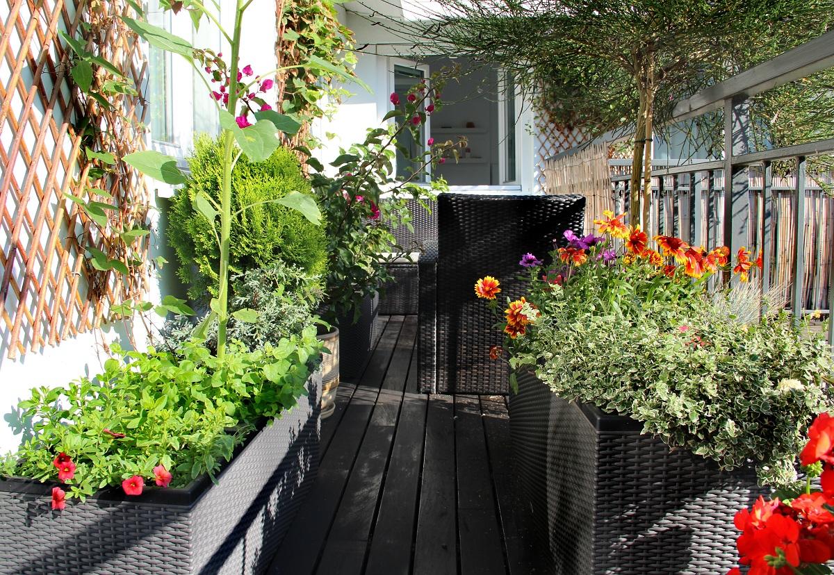 Cómo Crear Un Huerto Urbano En El Balcón De Tu Casa Nostoc