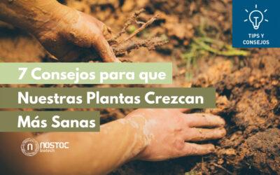 7 Consejos para que Nuestras Plantas Crezcan Más Sanas