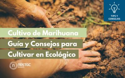 Cultivo de Marihuana: Guía y Consejos para Cultivar en Ecológico
