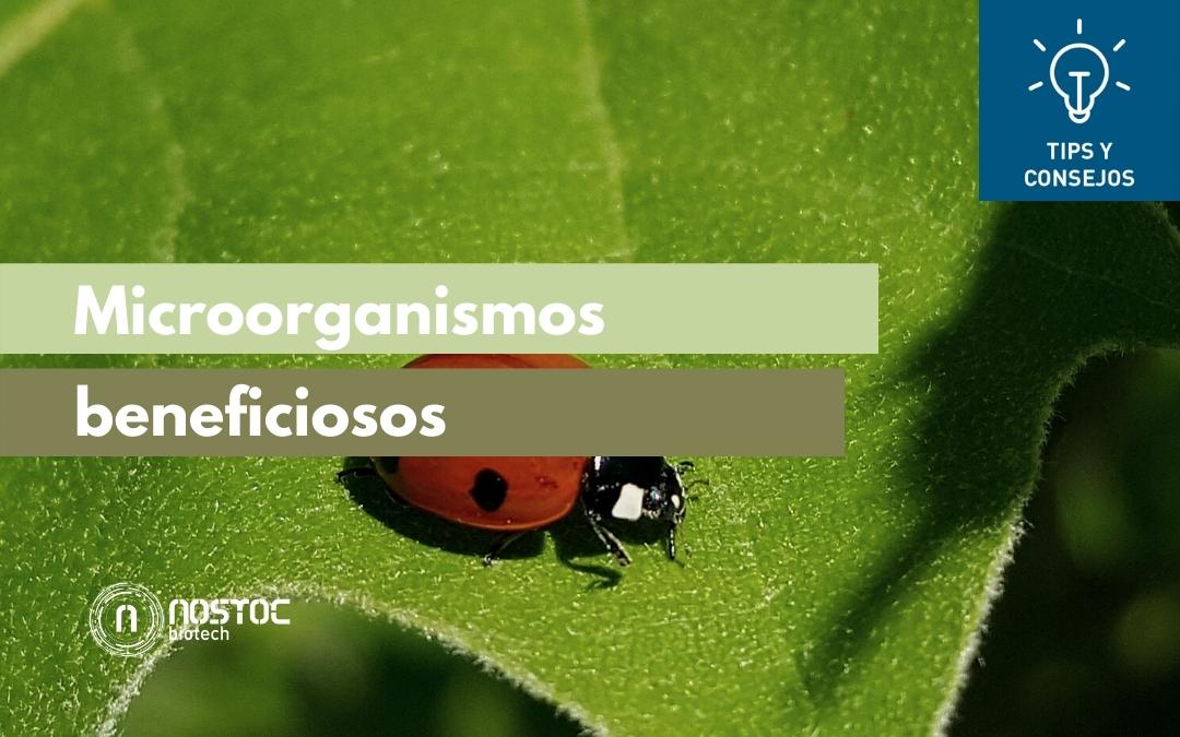 Microorganismos beneficiosos