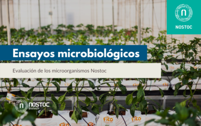 Ensayos microbiológicos