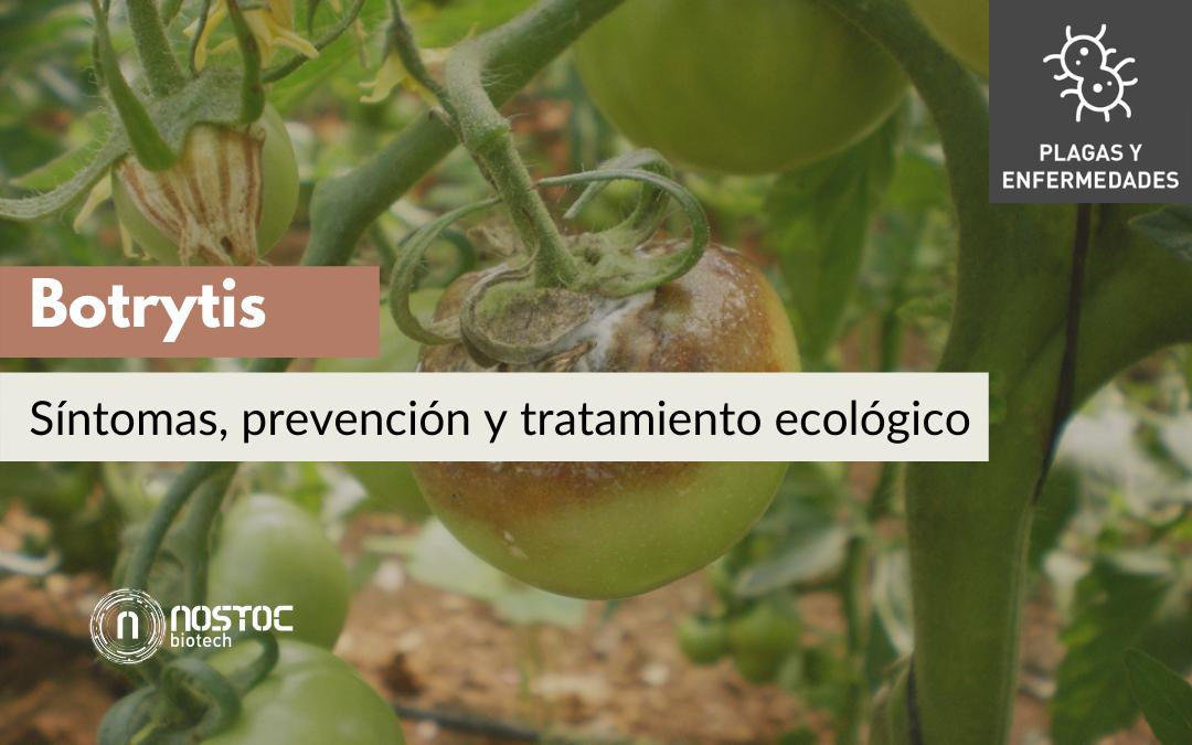 Botrytis: síntomas, prevención y tratamiento ecológico