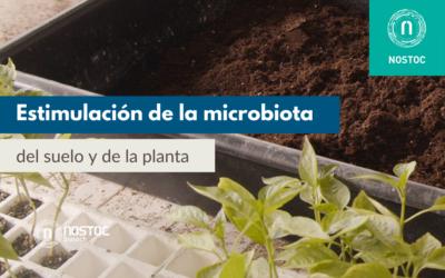 Estimulación de la microbiota del suelo y de la planta