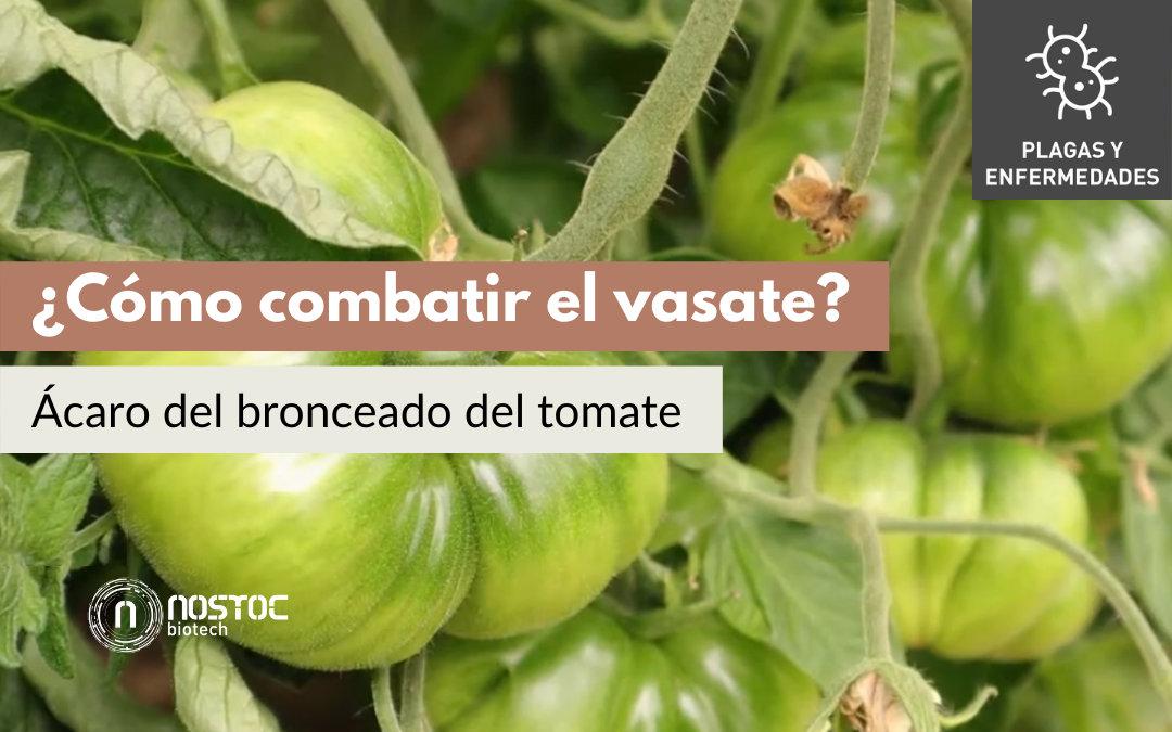 ¿Cómo combatir el vasate? El ácaro del bronceado del tomate