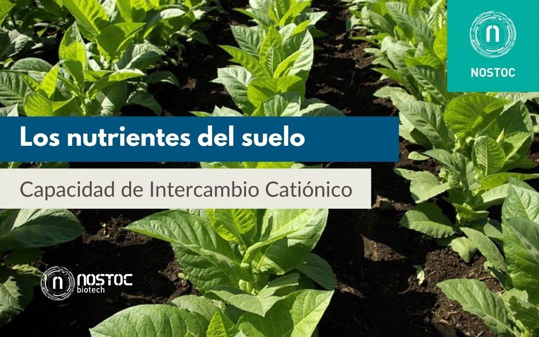 Los nutrientes del suelo y la Capacidad de Intercambio Catiónico (CIC)
