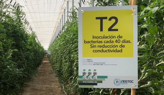 Detalle del sector correspondiente al tratamiento amarillo (T2).
