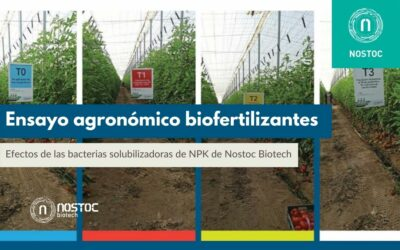 Efectos de las bacterias solubilizadoras de NPK de Nostoc Biotech
