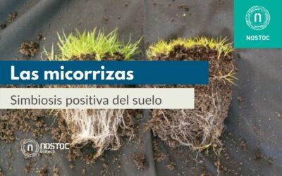 Las micorrizas: simbiosis positiva del suelo